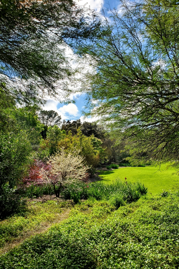 A colorful clearing at South Coast Botanic Garden