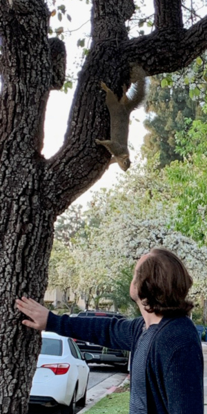 Saying hello to a squirrel