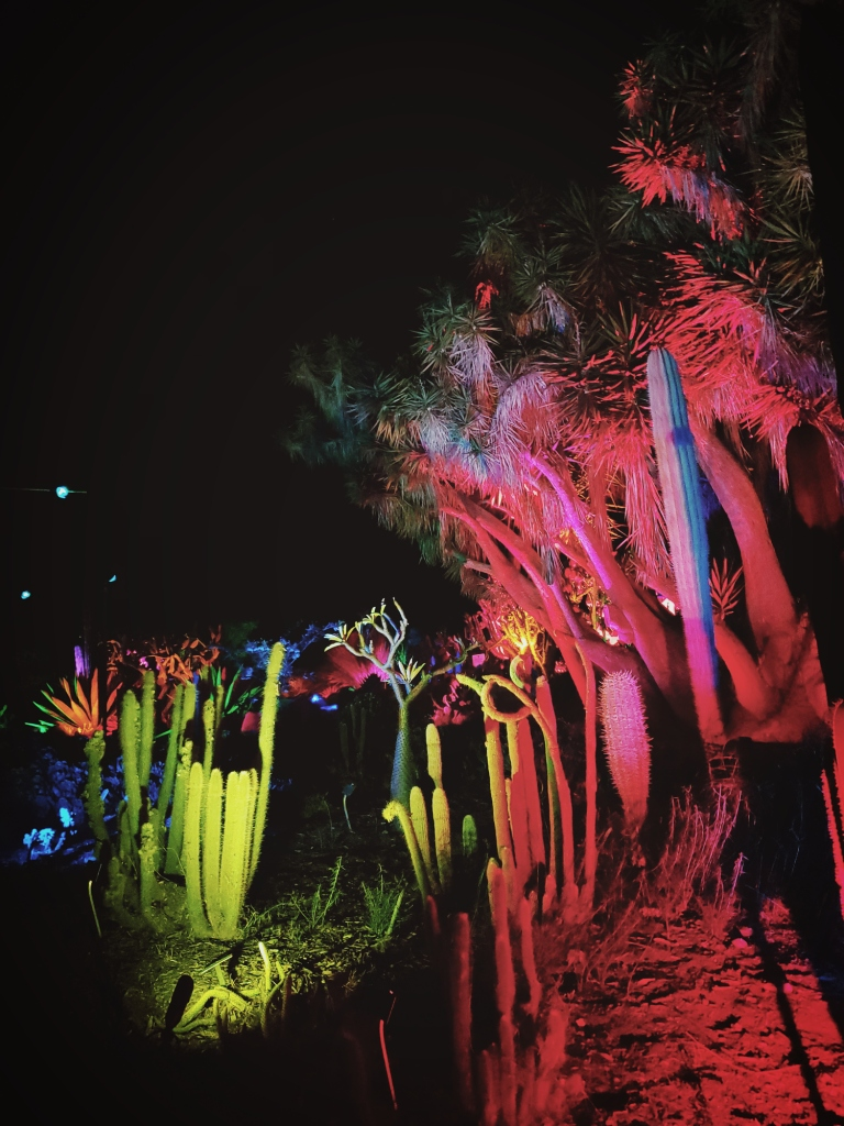 the cactus corner of south coast botanic gardens, done up with monster lighting to become a coral reef