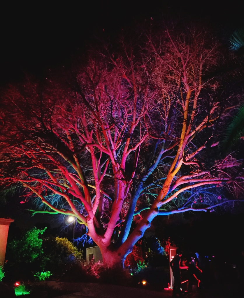 A tree near the entrance of the garden, lit up in vibrant purple, blue, magenta, orange, and green.