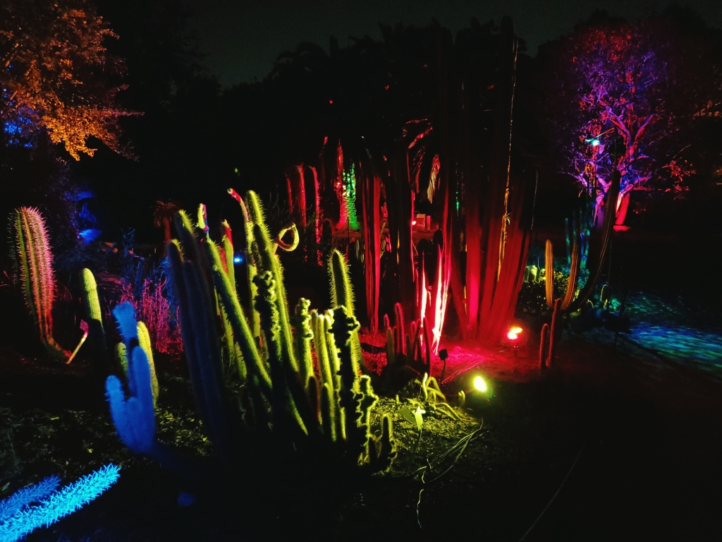 the cactus portion of south coast botanic garden gets new life in a new light at night