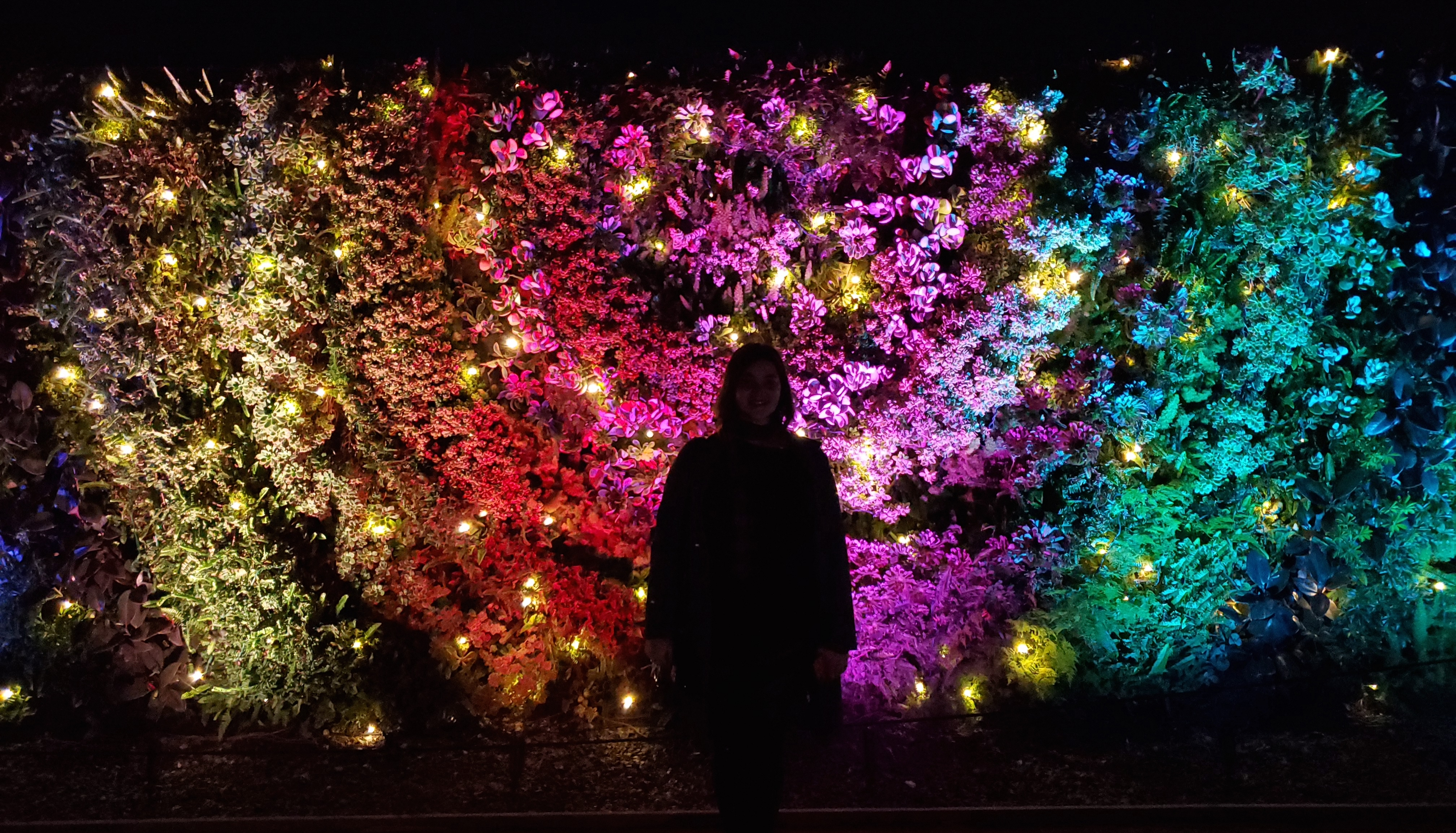 someone standing in front of the living wall