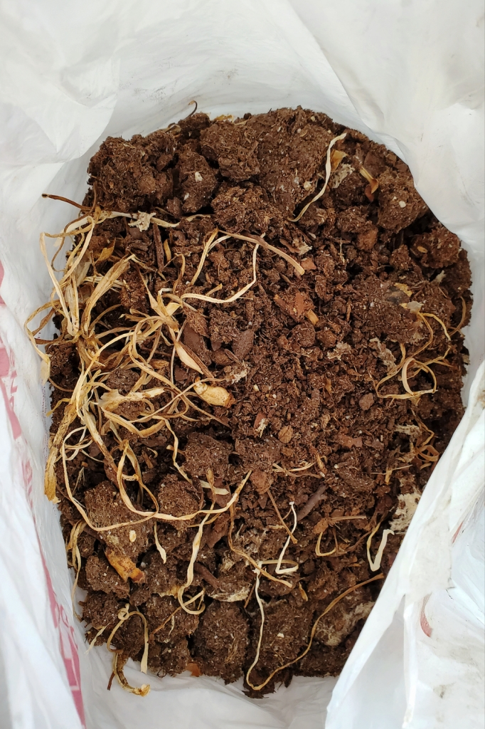 Dirt from a few daffodil planters. The bulbs were not actually dead, despite being left outdoors.