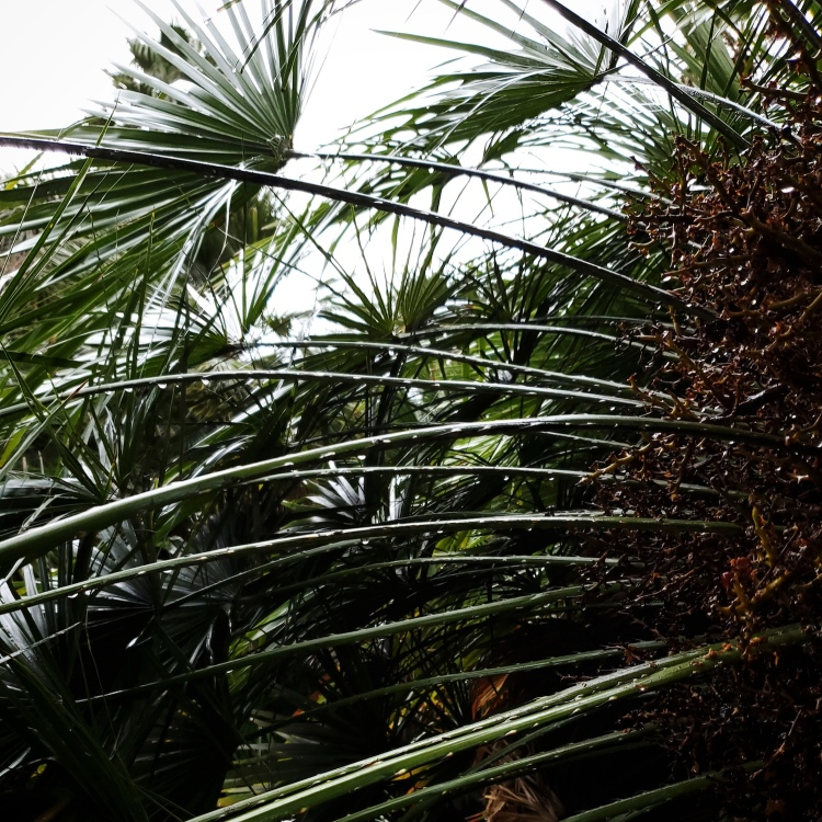 Some thin palm fronds growing in the rain