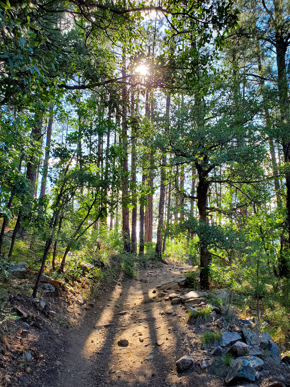 Sunlight shines through the trees in Arizona