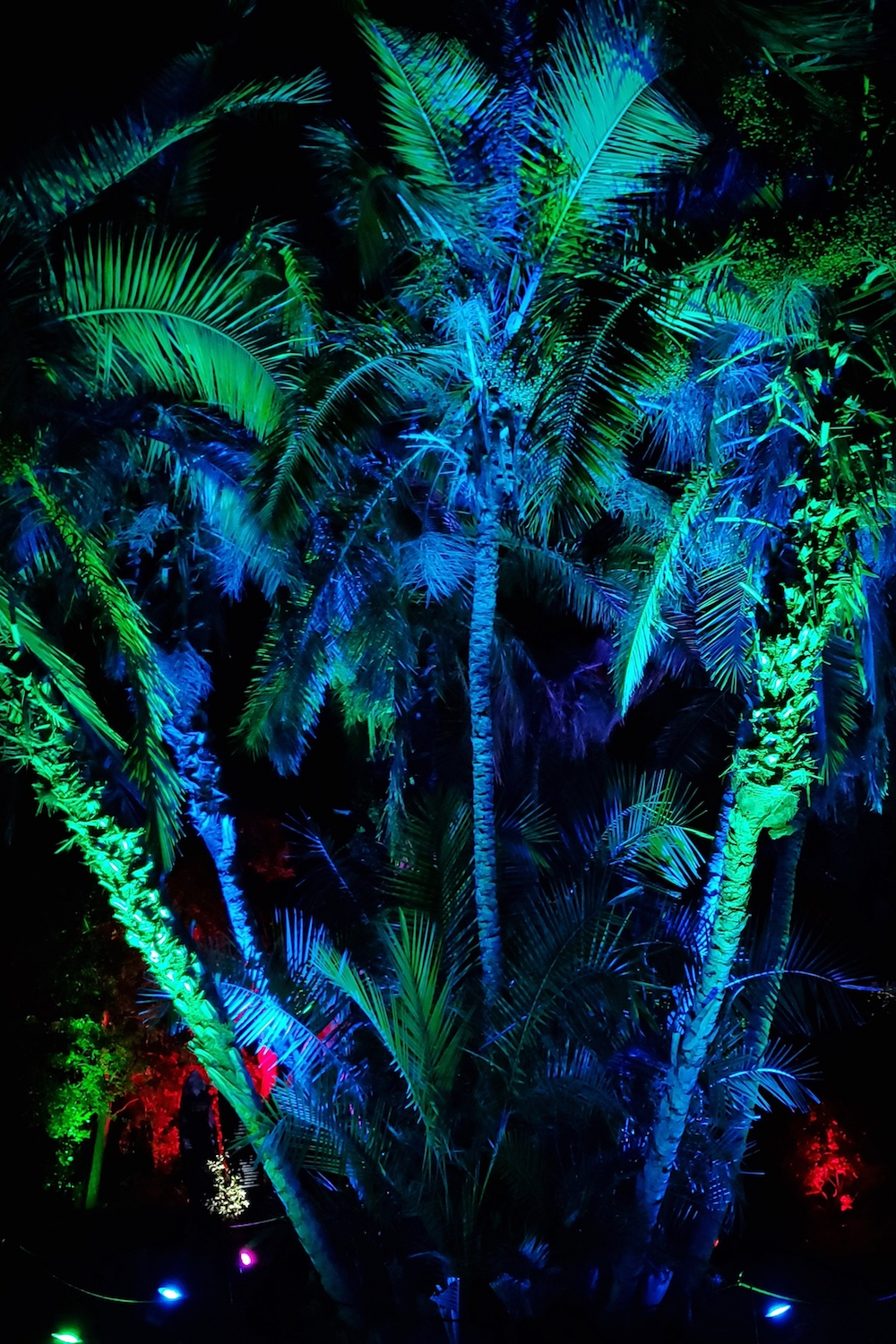 palm trees lit from underneath in blue and green
