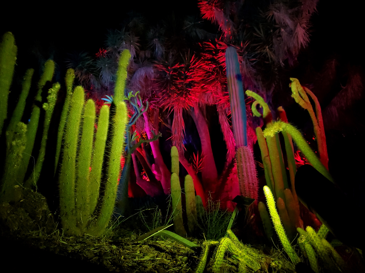 Cacti look like underwater coral when lit from beneath