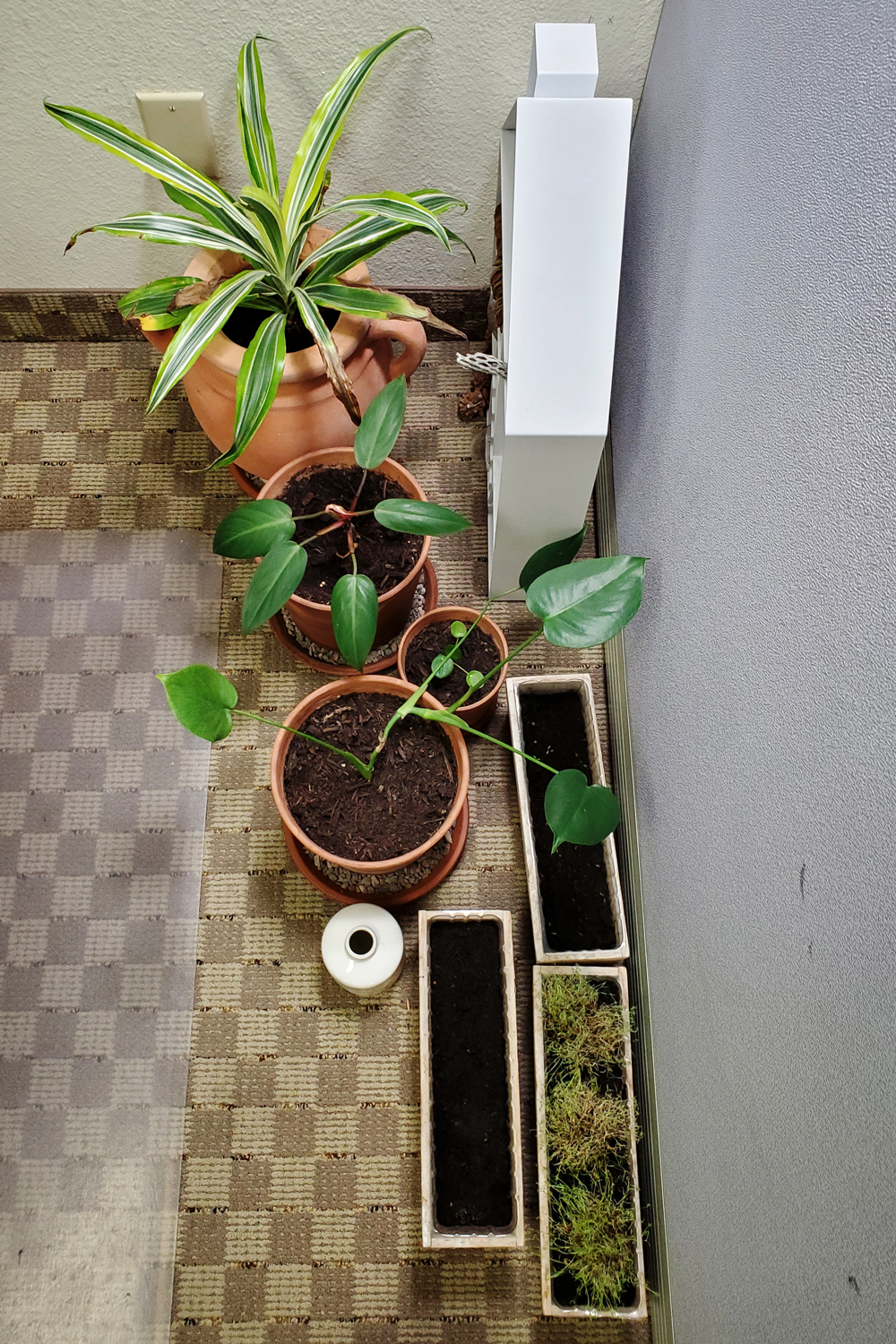 The plants hiding behind the corner of my desk