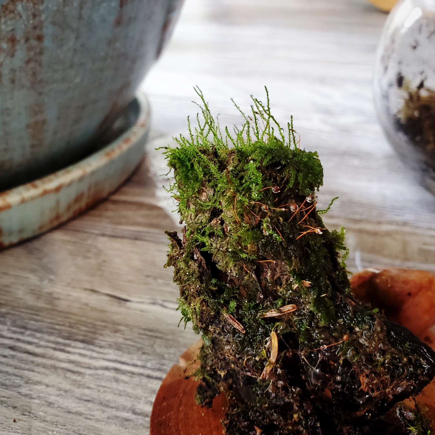 A log piece that is covered in different mosses