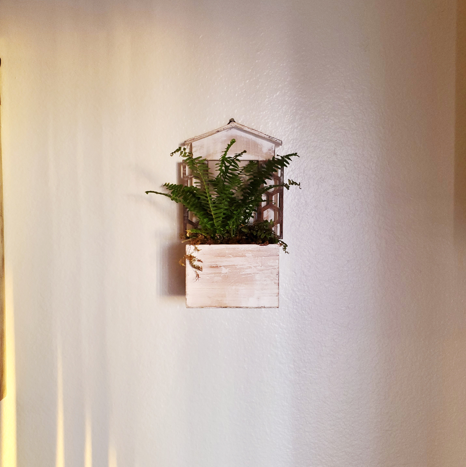 A Boston Fern sitting in a wooden planter hanging on the wall