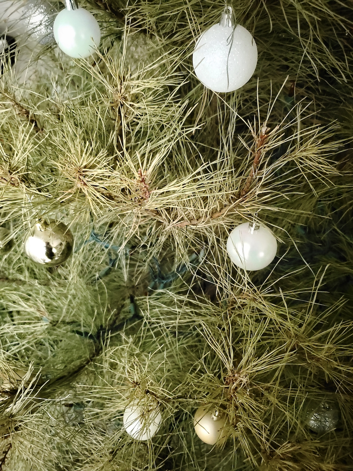 A Christmas tree alive until february