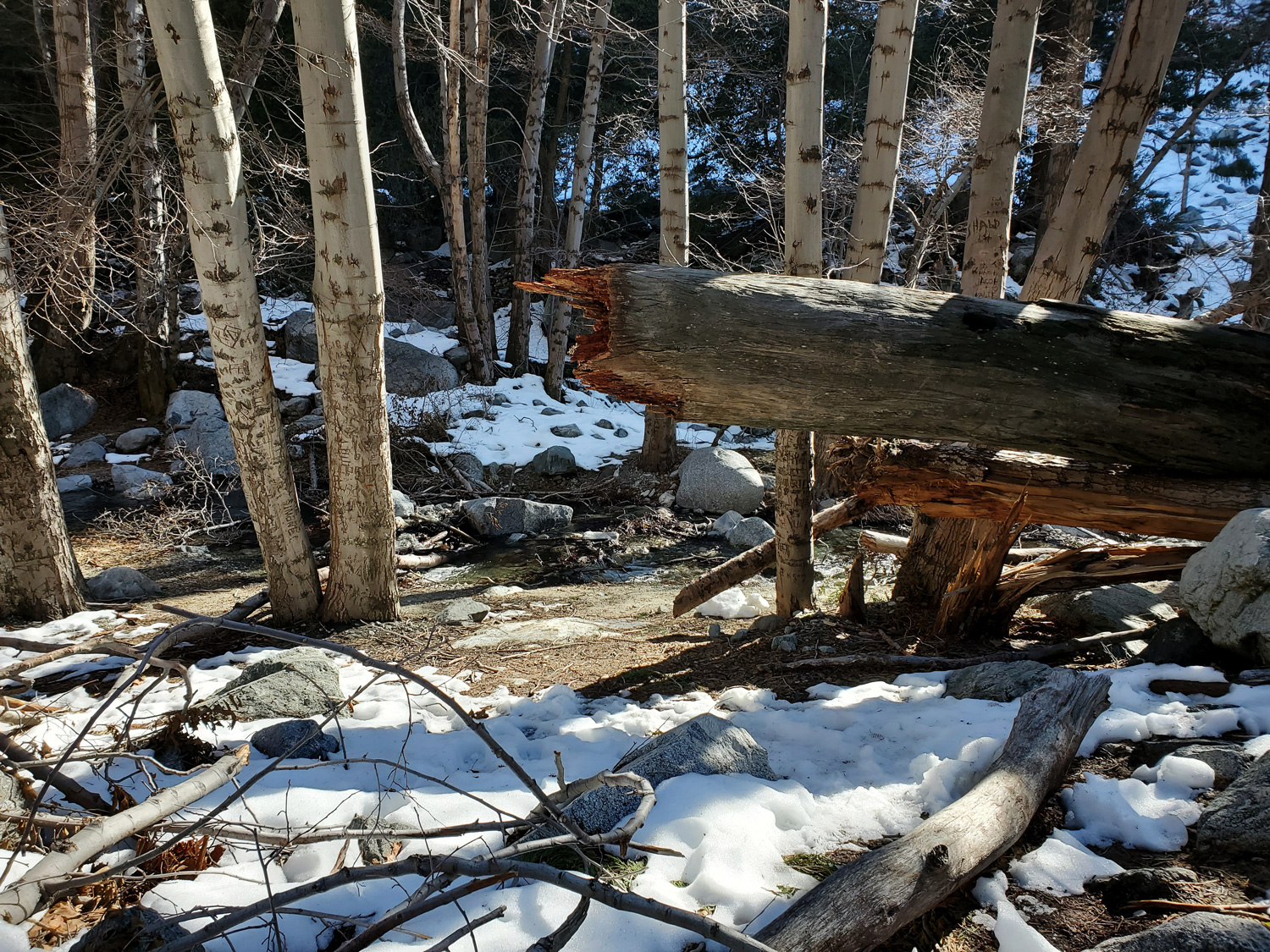 A fallen tree on the Icehouse Canyon Trail, adjacent the stream