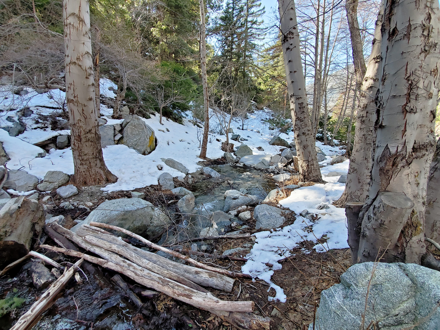 A bridge made of fallen logs crosses the stream at the entrance to Icehouse Canyon Trail