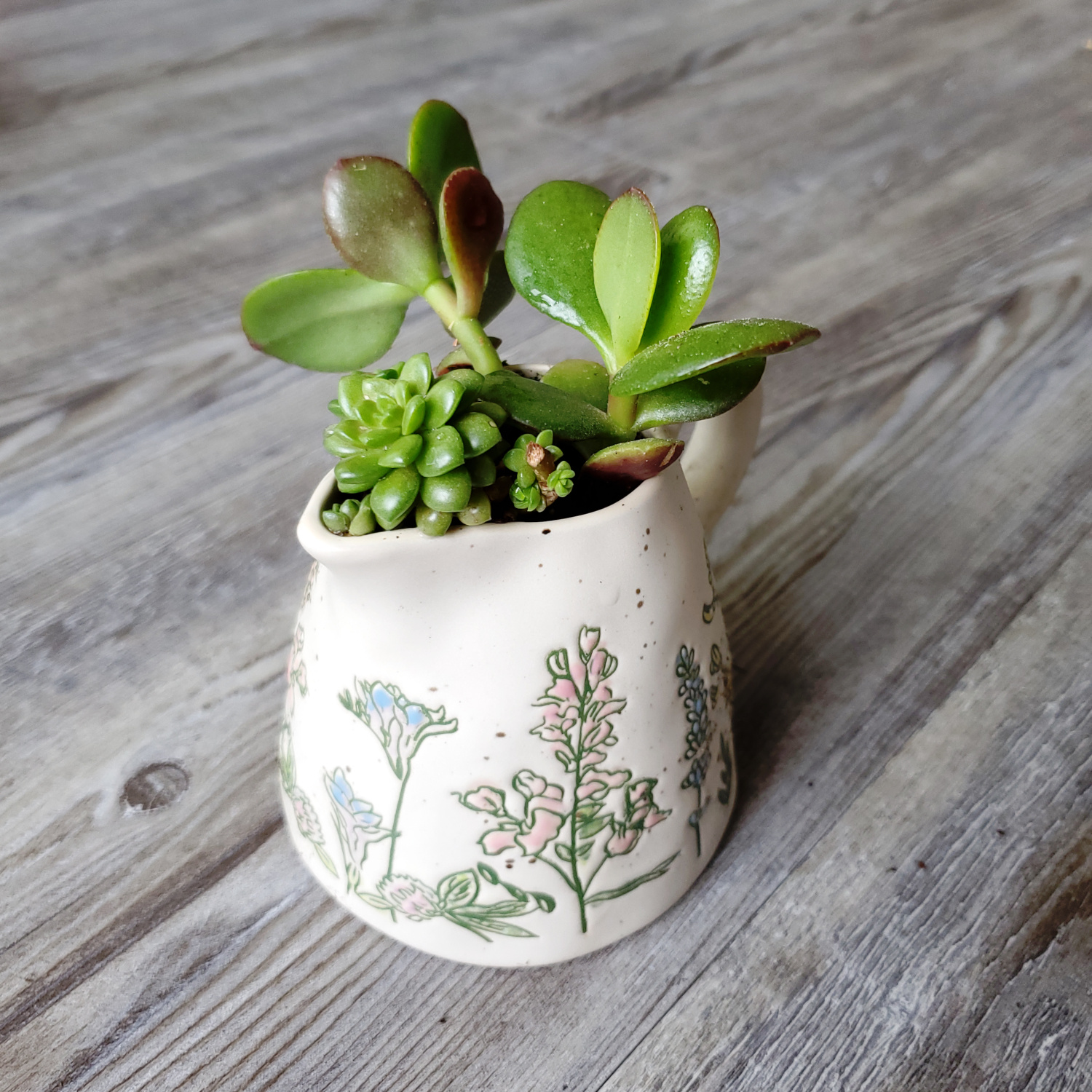 Crassula Jade Plant and a Sedum in a plant themed cup!