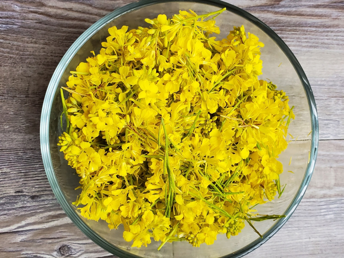 A handful of mustard flowers fresh after being picked