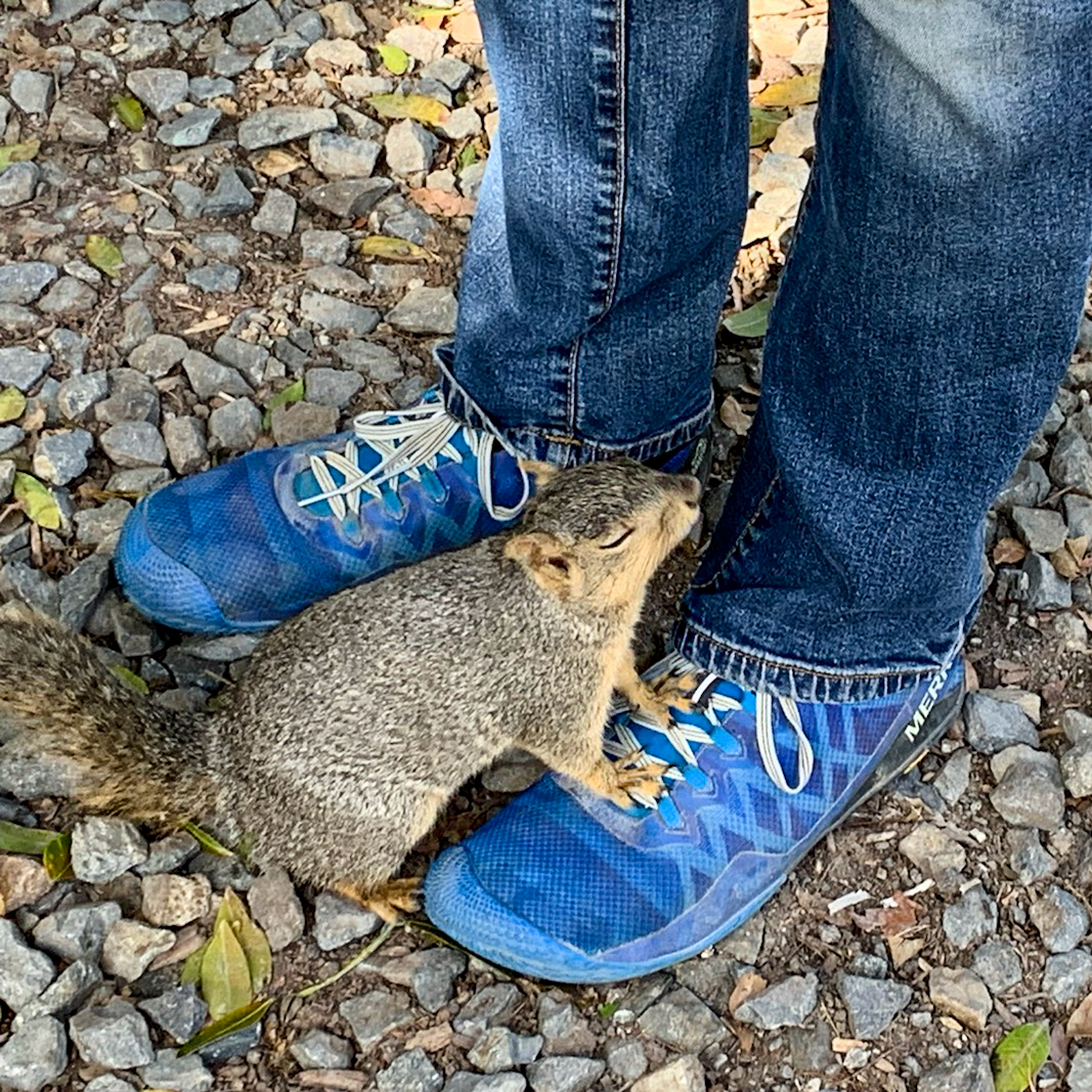 A friendly squirrel cooling its feet on my shoes