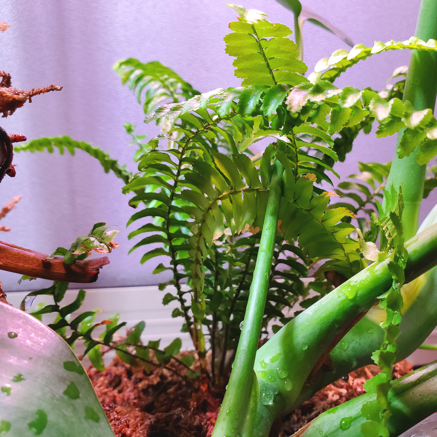 the fern is growing happily in the shade of the other plants
