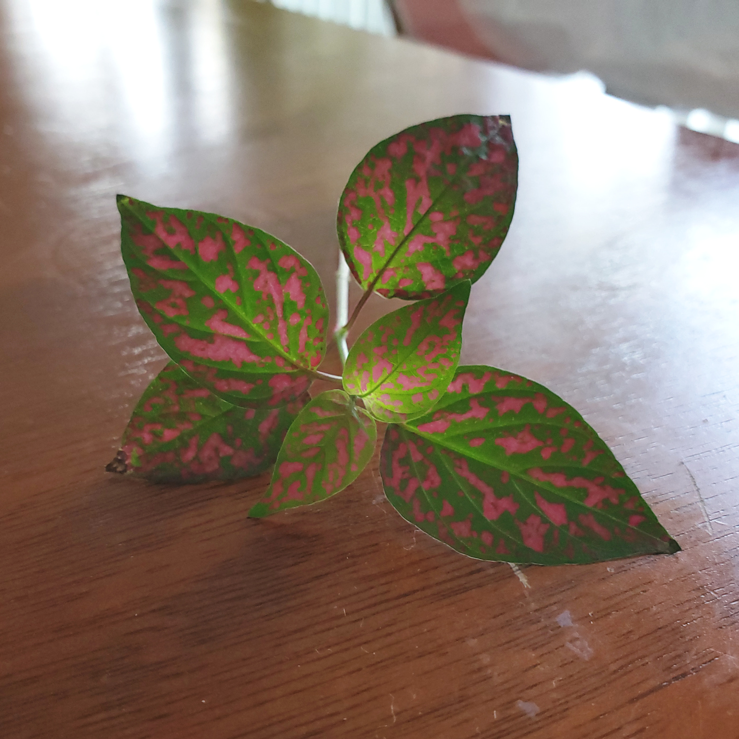 The polka dot leaves glow with light