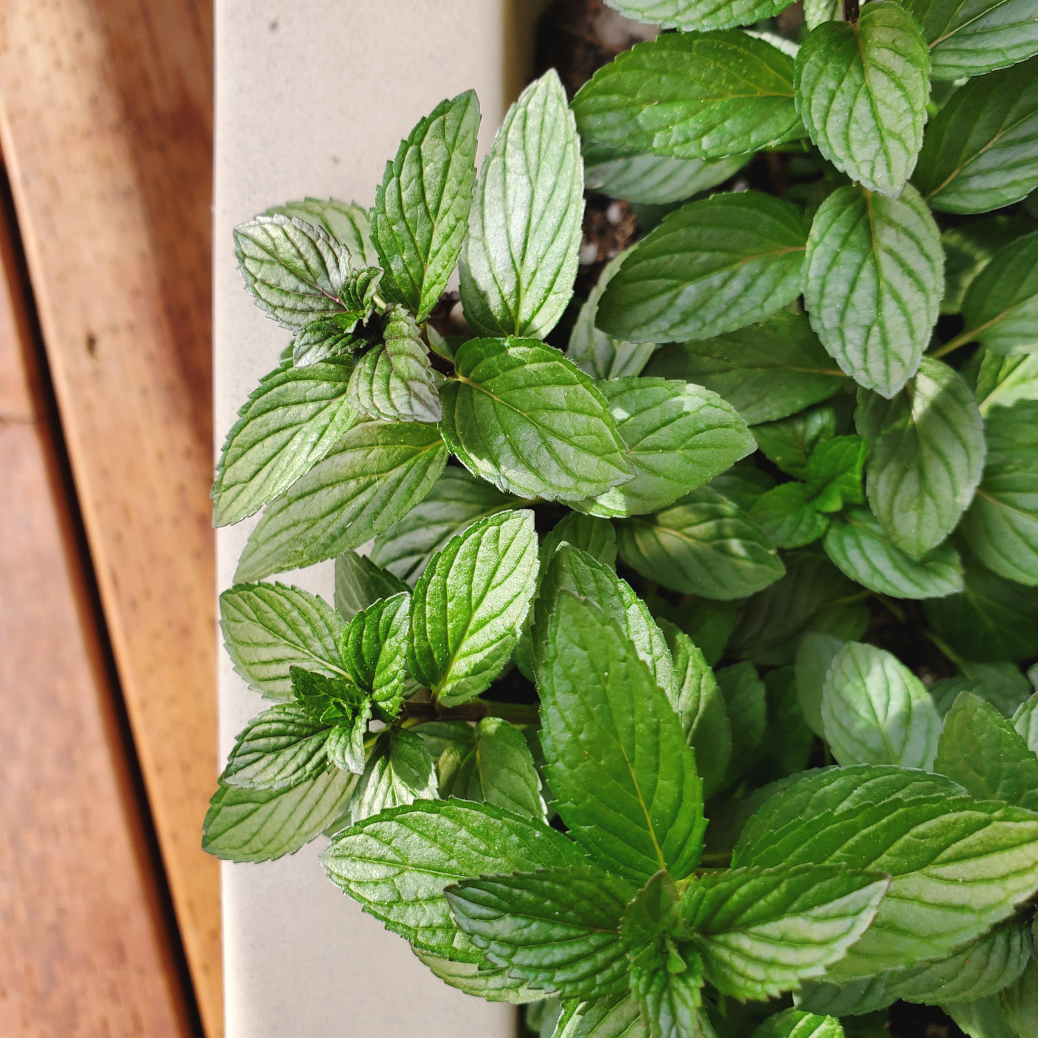 Every mint leaf looks absolutely perfect